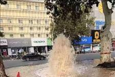 「安阳资讯」突发!网友反映红旗路金豪门口被水淹了!究竟怎么回事?